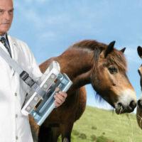 Esaote MyLab One veterinär